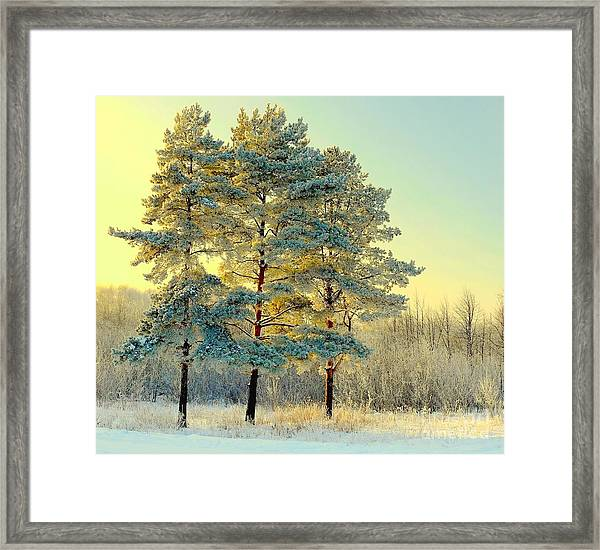 Beautiful Landscape With Winter Forest Framed Print by Deserg