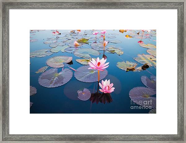 Beautiful Lotus Flower Outdoor Framed Print