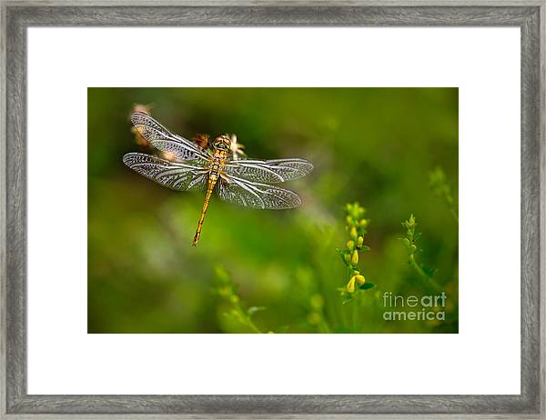 Beautiful Nature Scene With Common Framed Print