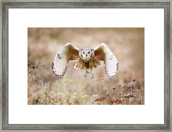 Beautiful Owl Photographed While Framed Print