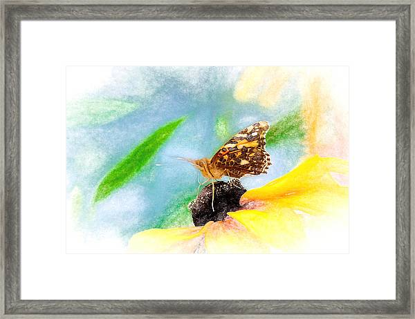 Beautiful Painted Lady Butterfly Framed Print