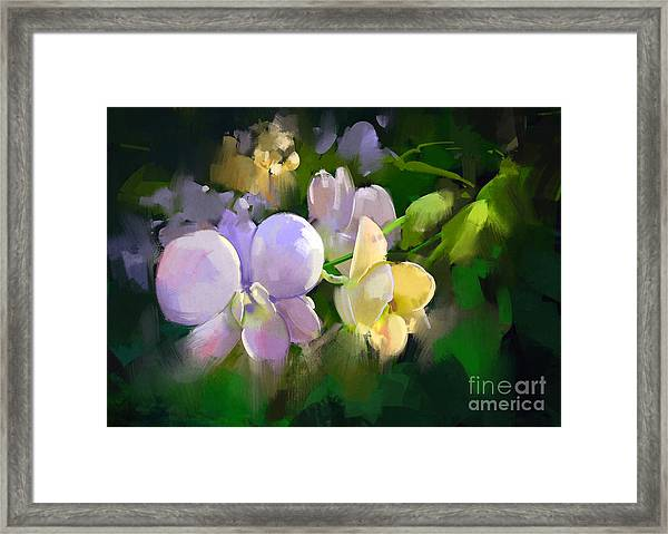 Beautiful Painting Of Orchid Framed Print
