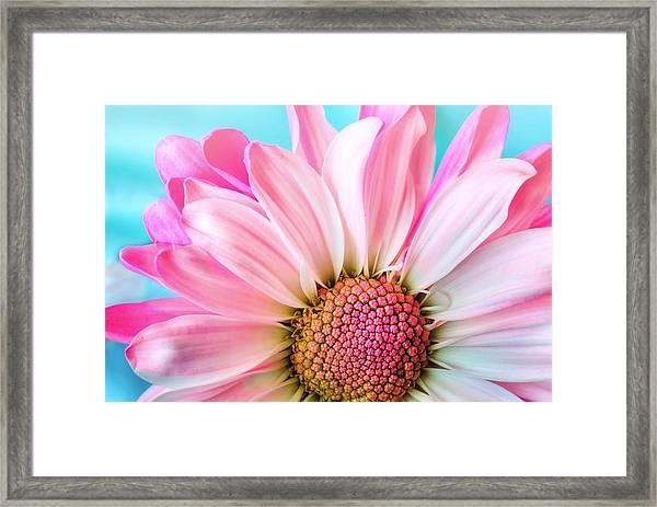 Beautiful Pink Flower Framed Print
