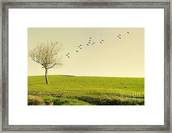 Beautiful Poetic Landscape With A Tree Framed Print