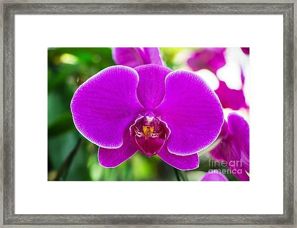 Beautiful Purple Orchid Flowers Framed Print