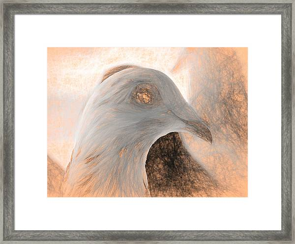 Beautiful Racing Pigeon Da Vinci Framed Print