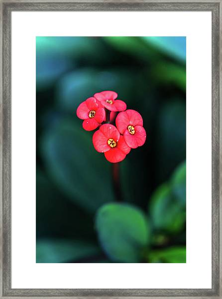 Beautiful Summer Flowers Framed Print