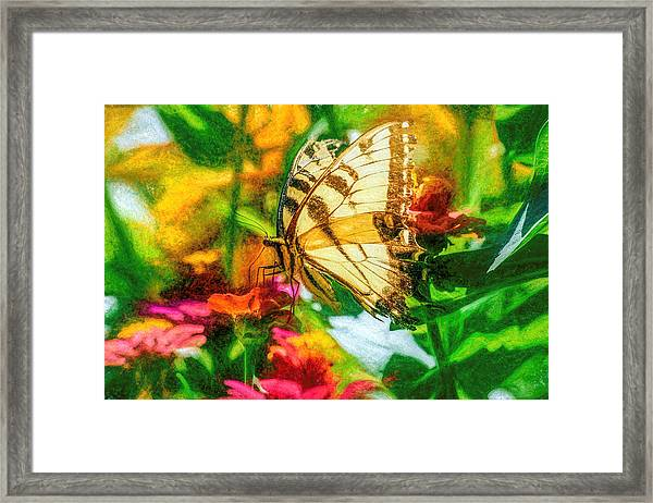 Beautiful Swallow Tail Butterfly Framed Print