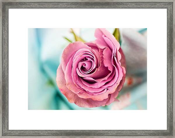 Beautiful Vintage Rose Framed Print