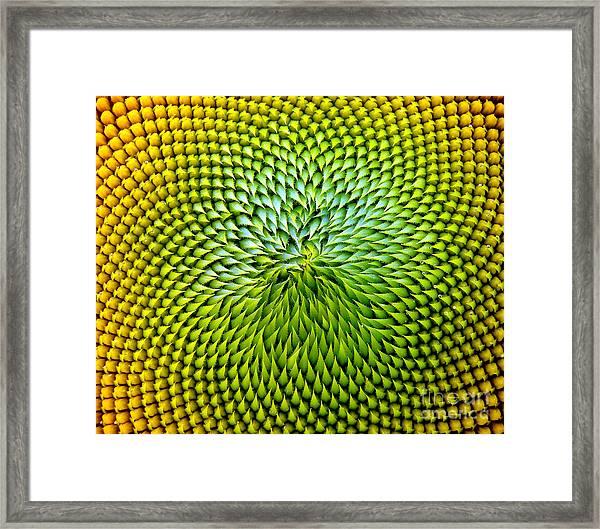 Beautiful Warm Sunflower Close Framed Print