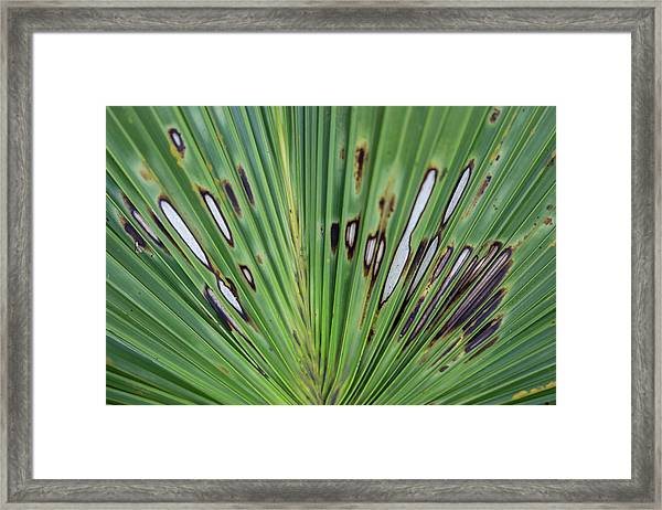 Beautifully Imperfect Framed Print