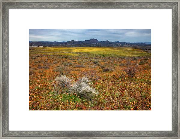Beauty But For A Moment Framed Print