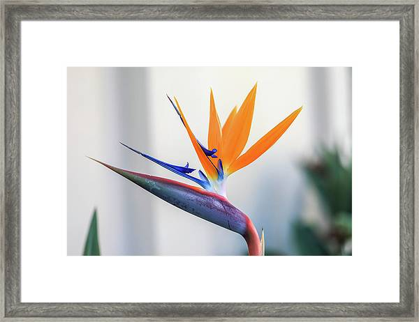 Beauty In Paradise Framed Print