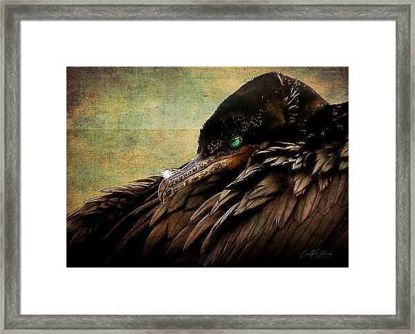 Beauty Is In The Eye -2 Framed Print