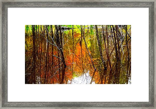 Framed Print featuring the photograph Beaver Pond Reflections by Bryan Smith