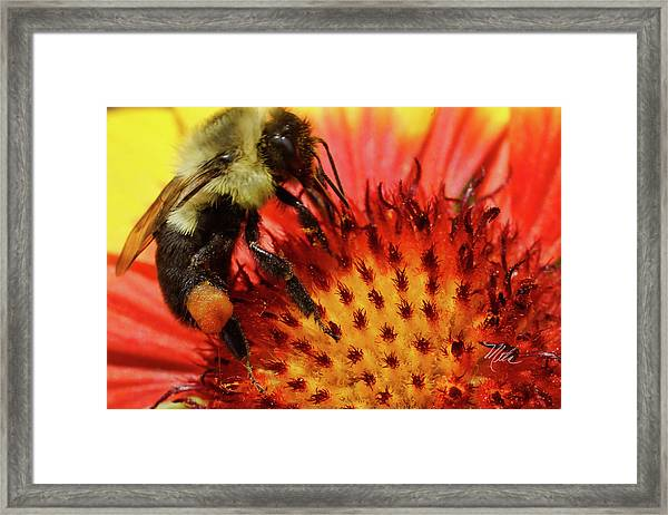 Bee Red Flower Framed Print
