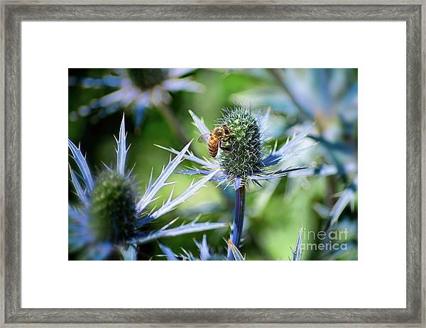 Bee's Got The Blues Framed Print