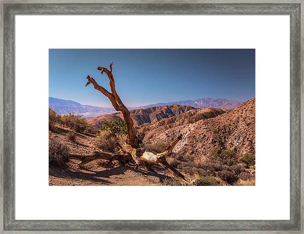 Behold, A Dead Tree Framed Print