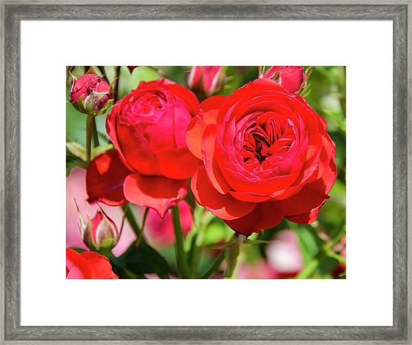 Best Buds In Red Framed Print