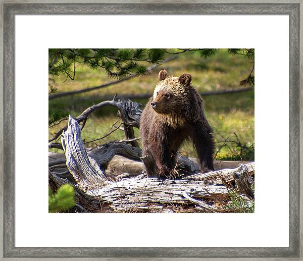 Better View From Here Framed Print