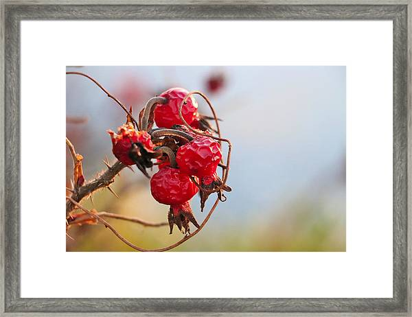 Between Summer And Winter Framed Print