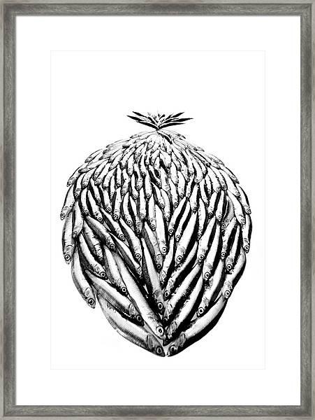 Big Fish Framed Print