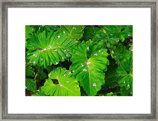 Big Green Leaves Framed Print