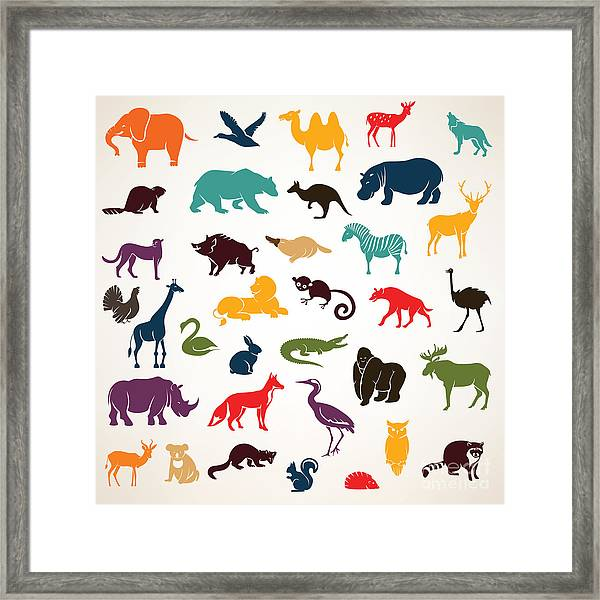 Big Set Of African And European Animals Framed Print