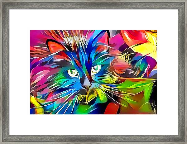 Big Whiskers Cat Framed Print