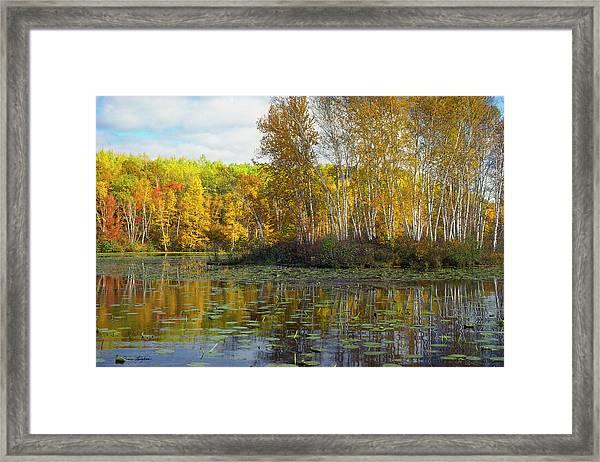 Birch Island Framed Print