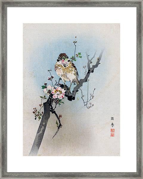 Bird And Petal Framed Print