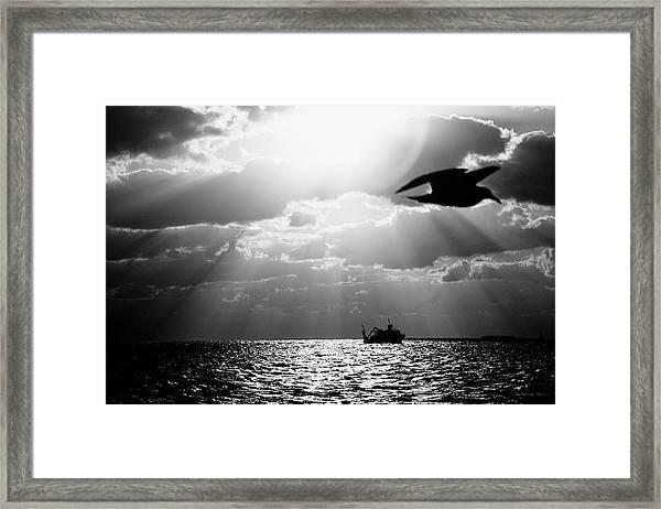 Bird Flying Over The Ocean With A Ship Framed Print