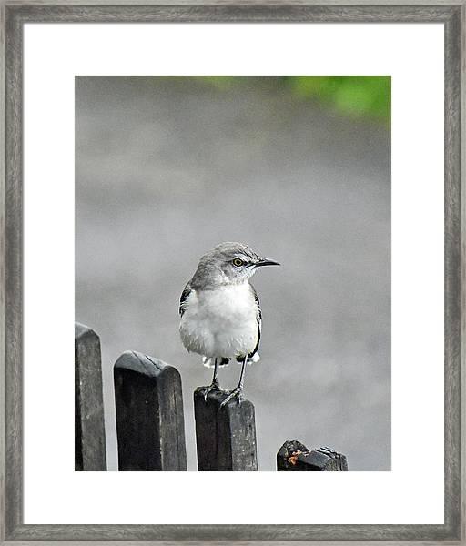 Bird Of Strawberry Hill Framed Print