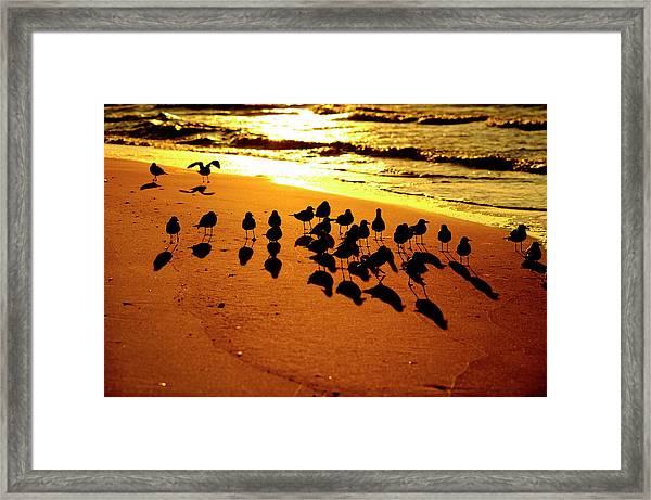 Bird Shadows Framed Print