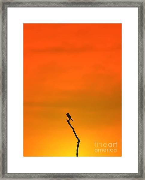 Bird Silhouette - Wildlife Background - Framed Print