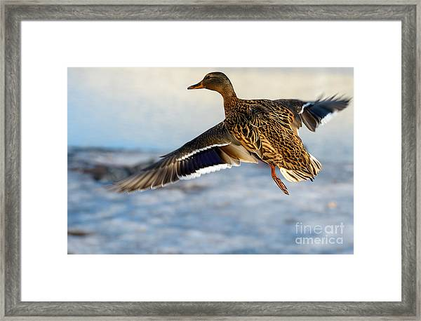 Birds And Animals In Wildlife. Awesome Framed Print