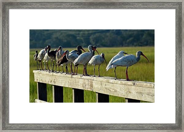 Birds Of A Feather On Jekyll Island Framed Print