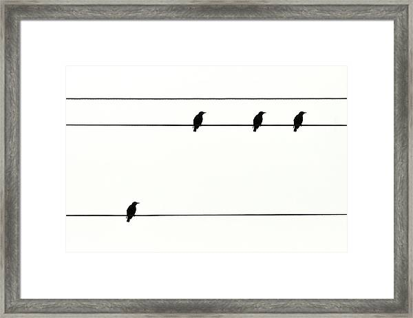 Birds On Power Lines Framed Print by Kees Smans
