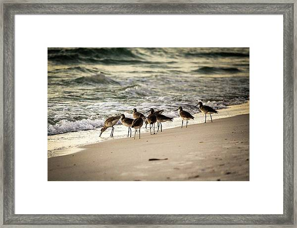 Birds On The Beach Framed Print