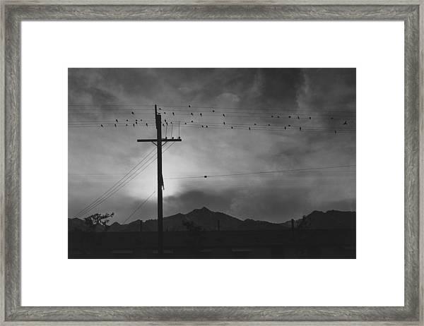 Birds On Wire, Evening Framed Print