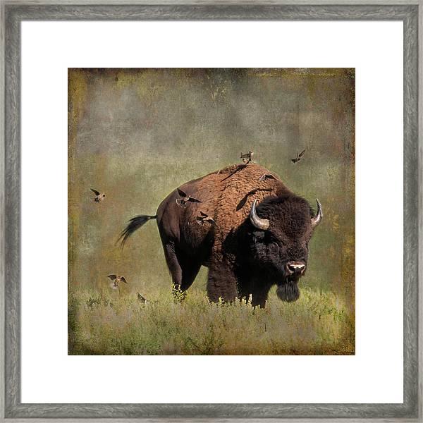 Bison And Friends Framed Print