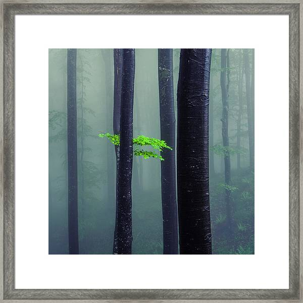 Bit Of Green Framed Print
