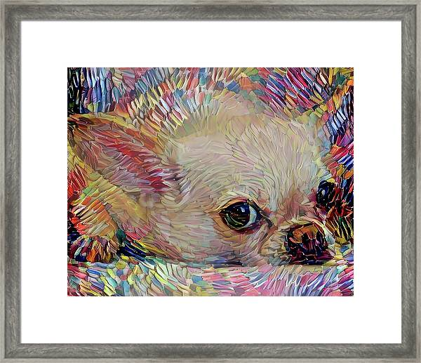 Bitsy The Chihuahua Framed Print