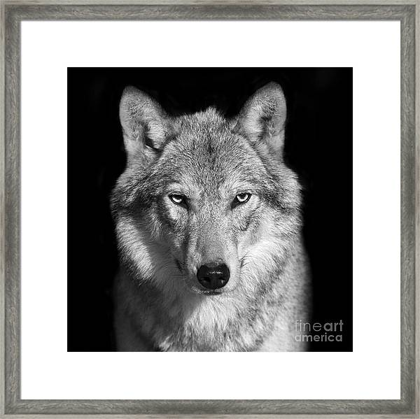 Black And White Close Up Portrait Of Framed Print