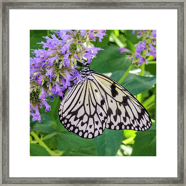 Black And White On Purple Framed Print