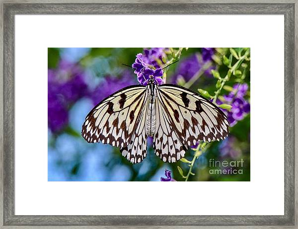 Black And White Paper Kite Butterfly Framed Print