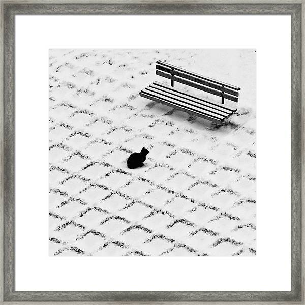 Black Cat Contemplating Bench Framed Print by Photo By Marianna Armata