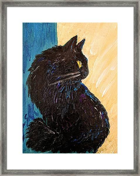 Black Cat In Sunlight Framed Print