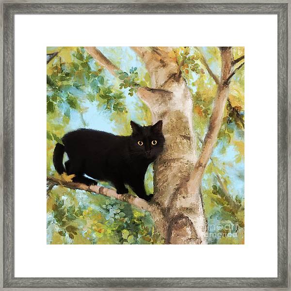 Black Cat In Tree Framed Print