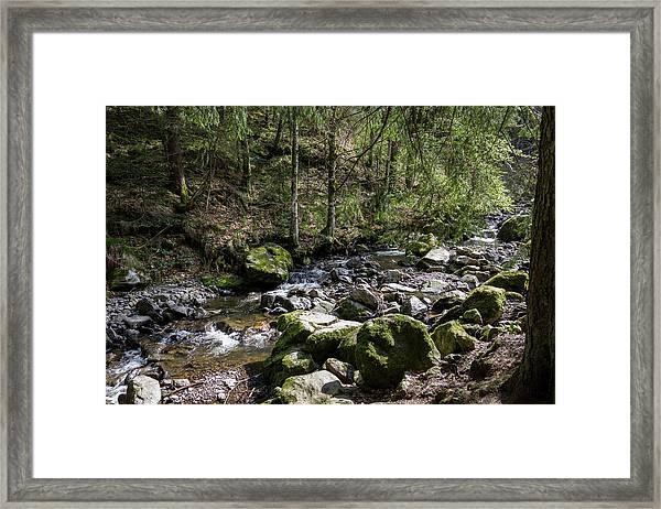 Black Forest Scene Framed Print